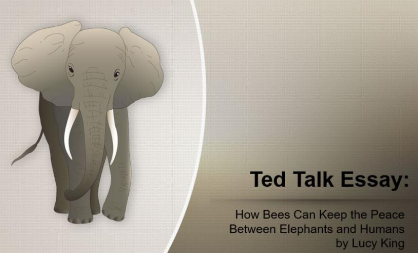 How bees can keep the peace between elephants and humans by Lucy King