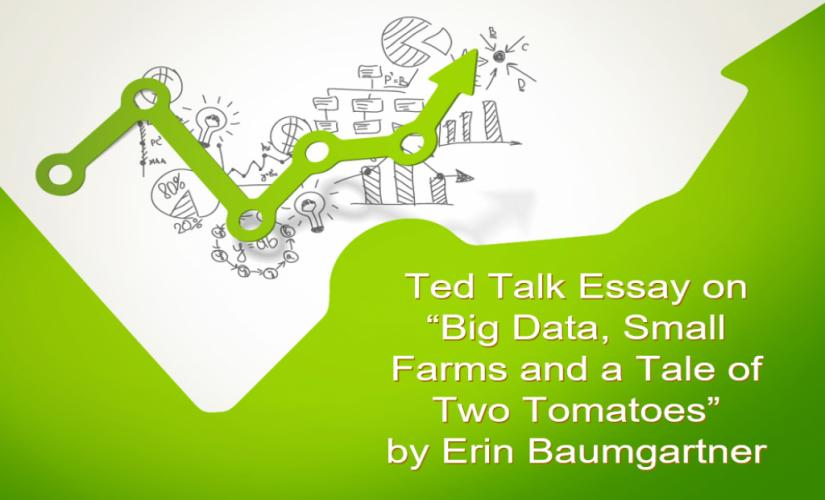Ted Tad Essay on Big Data, Small Farms and a Tale of Two Tomatoes by Erin Baumgartner